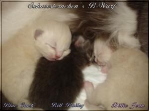 Neva Katzenbabys