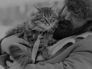 Rassebeschreibung Sibirische Katze