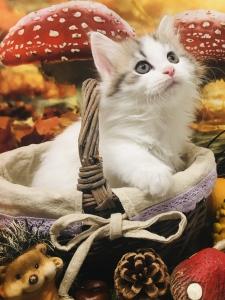 Sibirischer Katze
